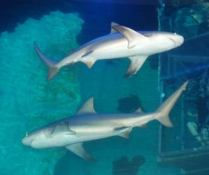 Cancún Tiburones 020 - Copy